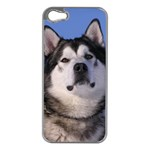 Use Your Photo Alaskan Malamute Dog Apple iPhone 5 Case (Silver)