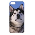 Use Your Photo Alaskan Malamute Dog Apple iPhone 5 Seamless Case (White)