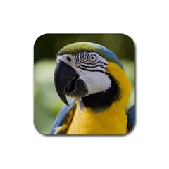 Handsome Parrot Rubber Square Coaster (4 pack) from MallPress.com Wholesale Dropship Stores Front